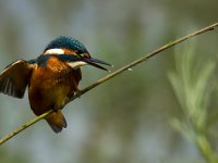 kingfisher_balance 14375988926