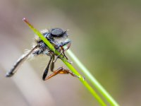 fly on grass sp unknown 16977927767