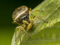 jumping spider 14418710951